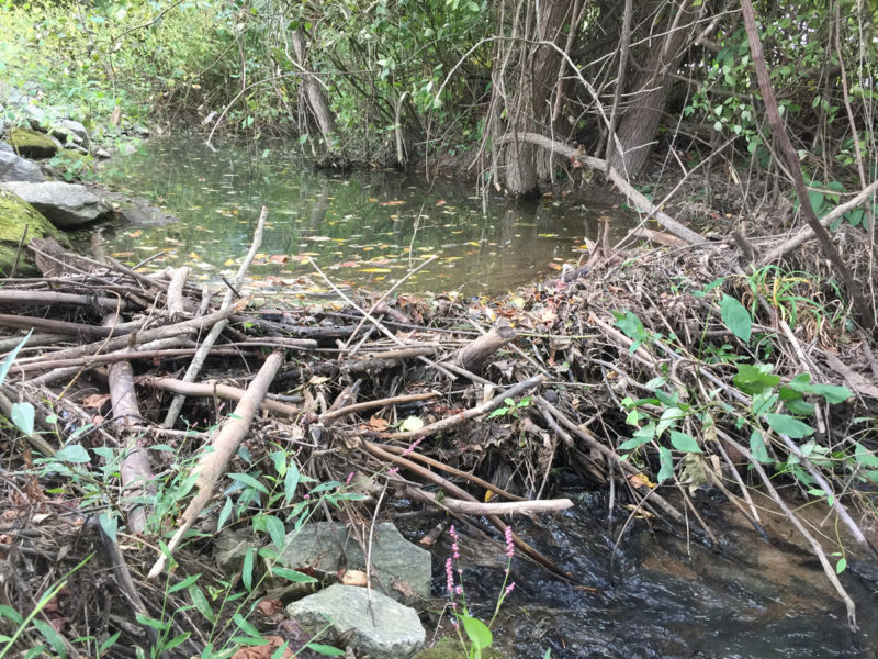 Beaver Dam on Meadow Brook - Somerset Swamp – Meadowbrook Log Cabin – Hendersonville NC