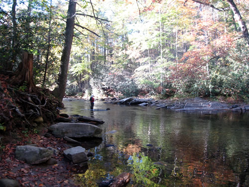 Fishing the Davidson River off The Art Loeb Trail in the Pisgah National Forest The Autumn leaves are reflected in the water.