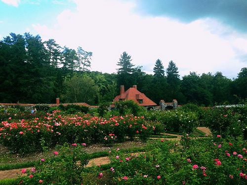 The Biltmore House Rose Garden has the more than 250 varieties of Roses - Things to do near Meadowbrook Log Cabin