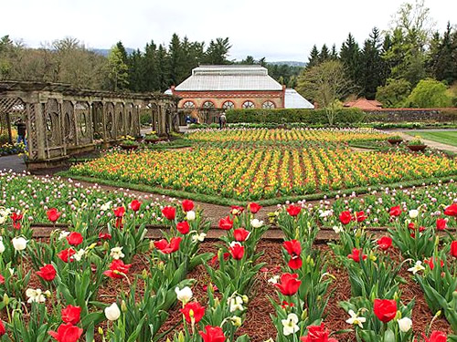 Biltmore Blooms: Tulips in the Walled GardeYellow, orange, pink, and purple Darwin hybrid tulip are a favorite part of Spring at the Biltmore Estate.n - Things to do near Meadowbrook Log Cabin
