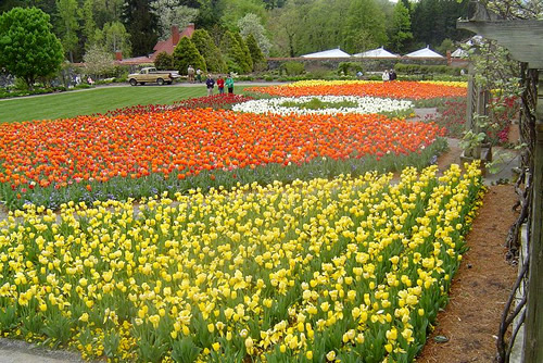 Every spring, Biltmore plants thousands of tulips in the Walled Garden. - Biltmore Blooms: Tulips in the Walled Garden - Things to do near Meadowbrook Log Cabin