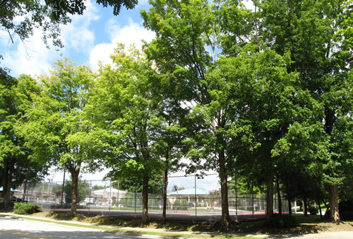 Tennis Courts at Boyd Park – Things to do near Meadowbrook Log Cabin in Hendersonville, NC