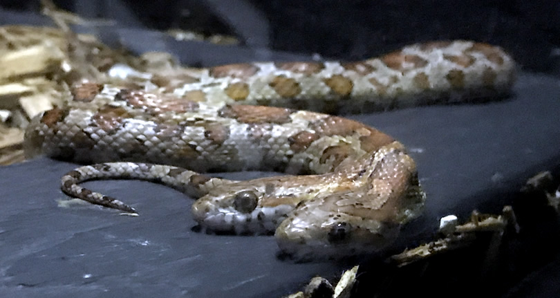 Serpentarium Magic – near Meadowbrook Log Cabin – Hendersonville, NC