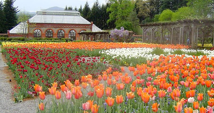 Biltmore Blooms: Tulips in the Walled Garden - Things to do near Meadowbrook Log Cabin