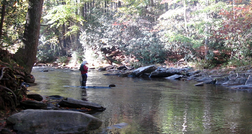 Fishing on the Davidson River off the Art Loeb Trail near Davidson River Campgrounds - Things to do near Meadowbrook Log Cabin