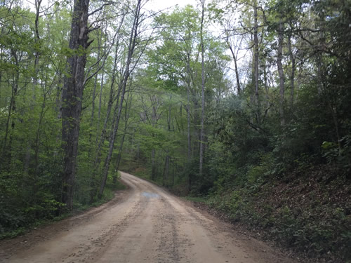 Drive from North Mills River Recreation Area to the Blue Ridge Parkway – Things to do near Meadowbrook Log Cabin