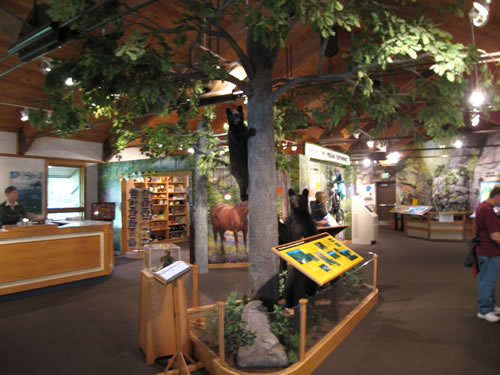 Interpretive Displays at Pisgah National Forest Visitor Center - Pisgah National Forest Ranger Station and Visitor Center – Things to do near Meadowbrook Log Cabin