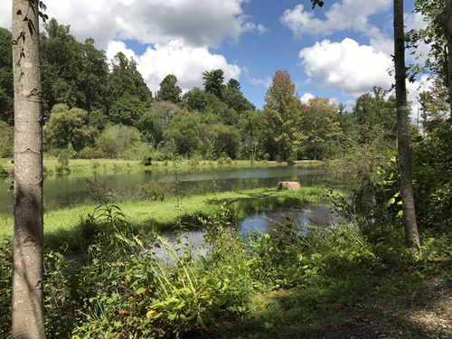 Rhododendron Lake - Rhododendron Lake Nature Park – Things to do near Meadowbrook Log Cabin