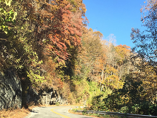 As you drive down the mountain, the colors get brighter in November - Late Fall Drive South along 176, the Old Spartanburg Highway