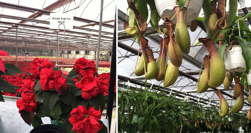 Open House at VanWingerden Greenhouses – Things to do near Meadowbrook Log Cabin in Hendersonville, NC