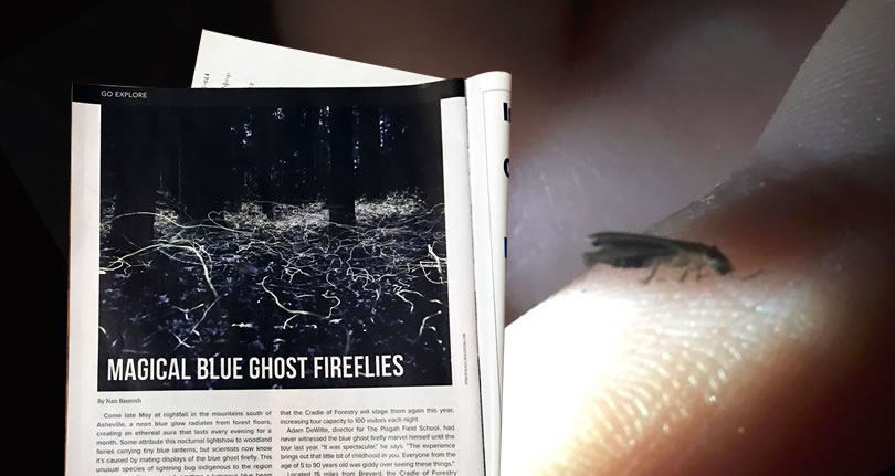 Blue Ghost Fireflies - Henderson County, NC