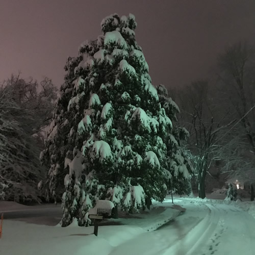 Hemlock Trees Heavy with Snow and the Road Before the Snow Plow - Winter at the Cabin