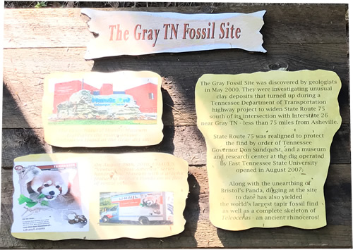 The Gray TN Fossil Site