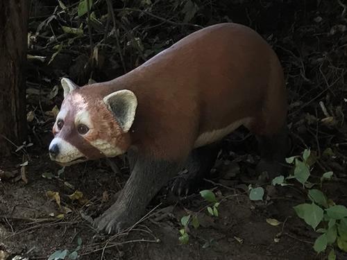 Bristol's Panda Model