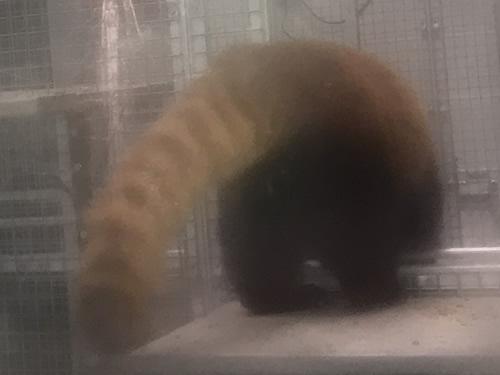 Leafa's Tail