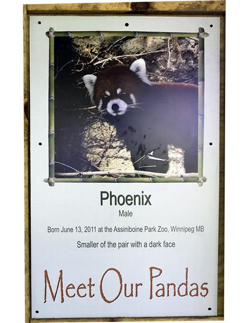 Meat Our Pandas: Phoenix